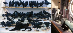 corbeau-lievre-noir-vitrine-Hermes