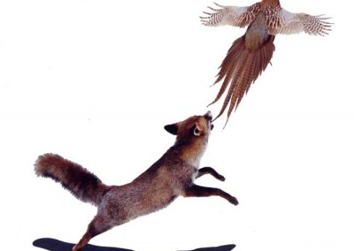 renard-_faisan_5 Taxidermer