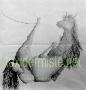 Cheval taxidermie pour jackie kaiser jacques gilbert - Modele dessin cheval ...