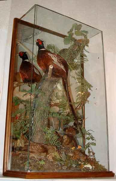 Diorama mural de faisan et bécasses taxidermés