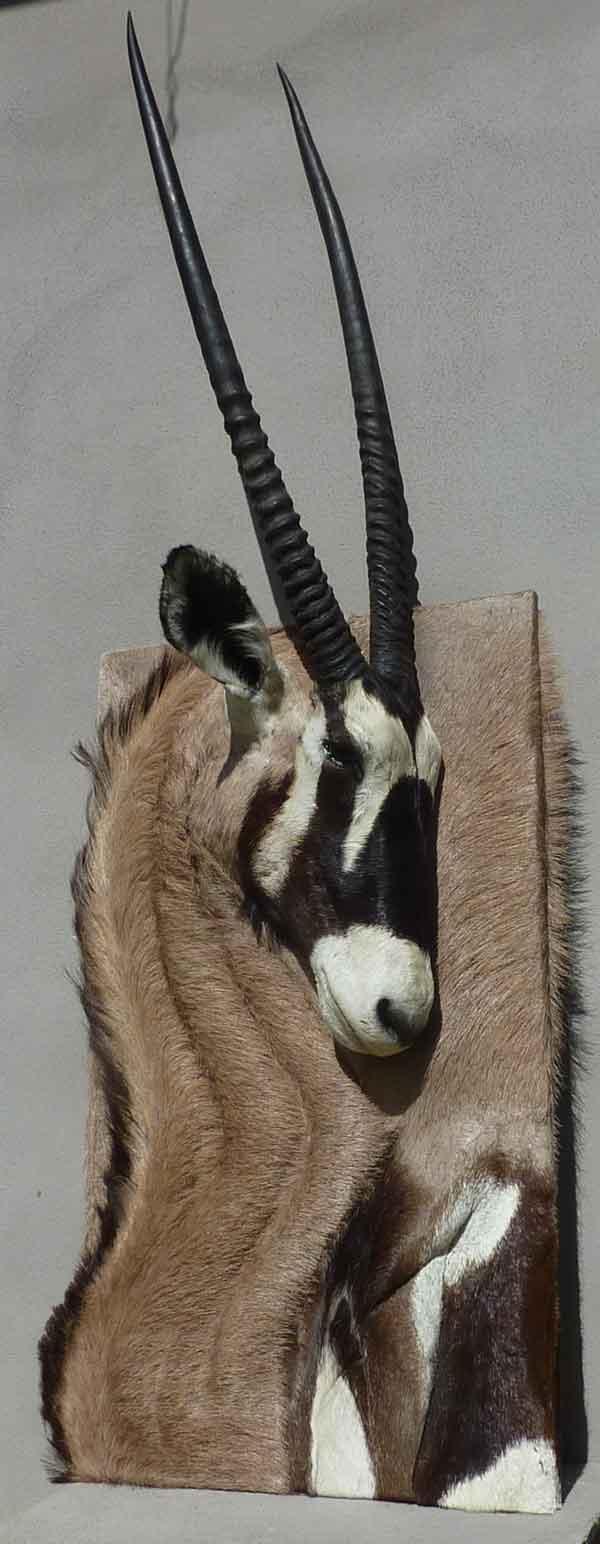 Oryx n°1  taxidermé à droite en bas-relief -tableau