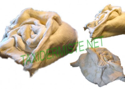 Rose Cochon de Elisabeth Gilbert Dragic