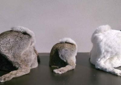 Ghyslain Bertholon trochés---gros-lapin