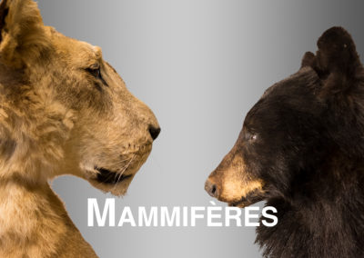 Mammifères2